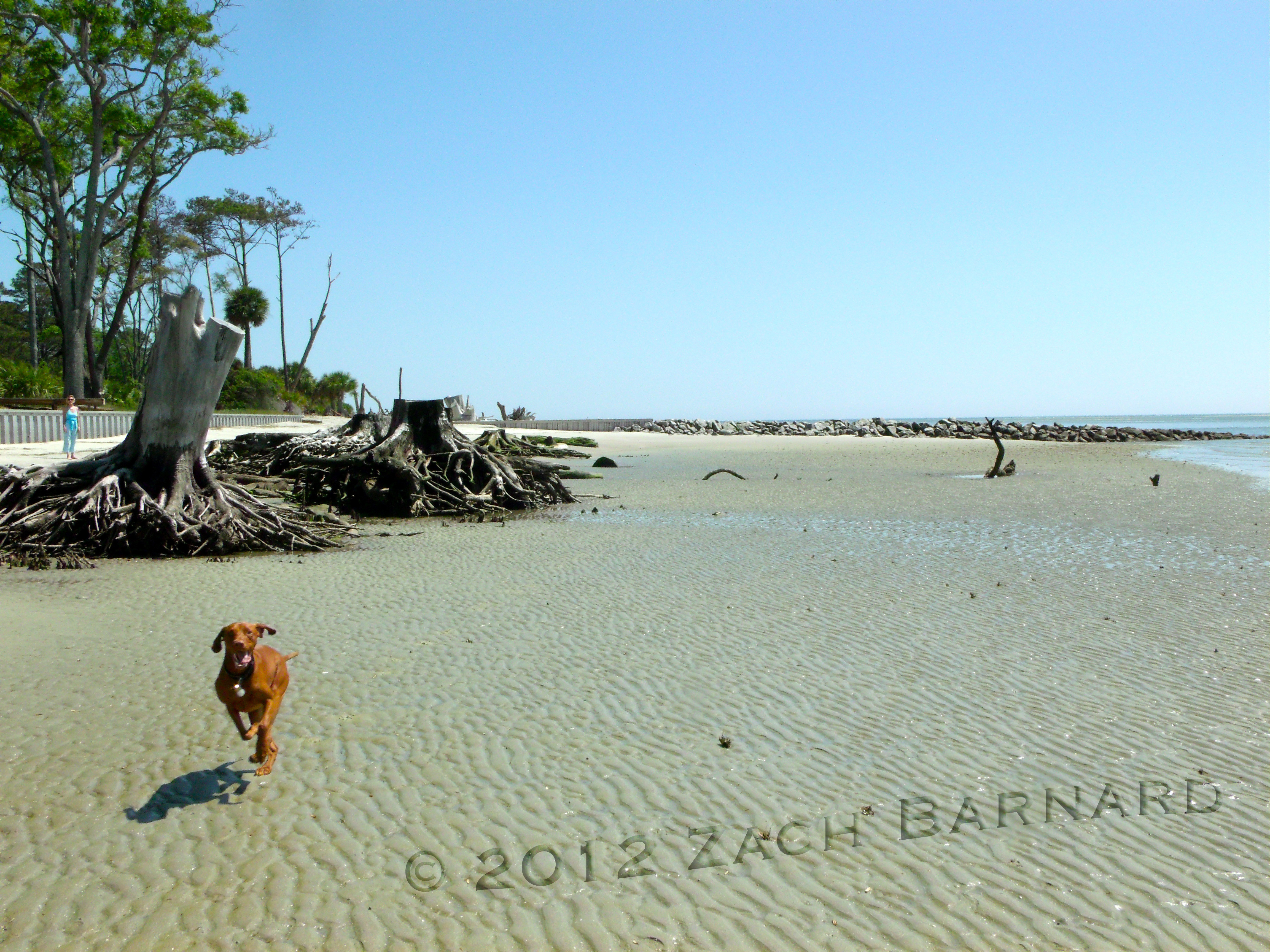 A Walk on Daufuskie Island